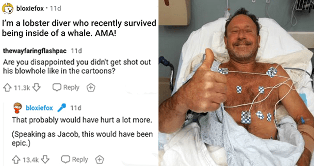 man who survived being trapped inside a whale's mouth answers Reddit questions | thumbnail includes a picture of a man post-surgery giving a thumbs up 'I'm a lobster diver who recently survived being inside of a whale. AMA! Product - thewayfaringflashpac 11d Are you disappointed you didn't get shot out his blowhole like in the cartoons? 4 11.3k | Reply + bloxiefox 11d That probably would have hurt a lot more. (Speaking as Jacob, this would have been epic.) 4 13.4k Q Reply +, 2@23'