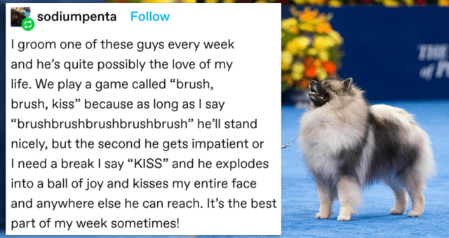 """animal tumblr posts 