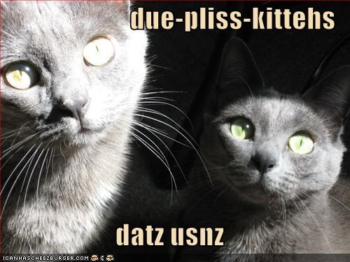 due-pliss-kittehs  datz usnz