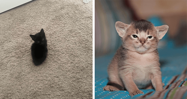 collection of pictures of tiny kittens | thumbnail includes two pictures of kittens