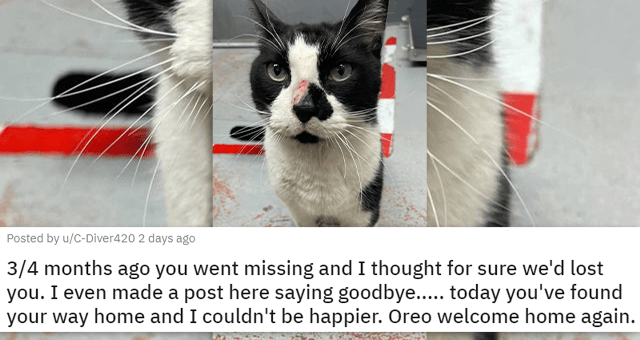 a collection of posts about cats | thumbnail includes a picture of an injured cat '3/4 months ago you went missing and I thought for sure we'd lost you. I even made a post here saying goodbye..... today you've found your way home and I couldn't be happier. Oreo welcome home again. u/C-Diver420'