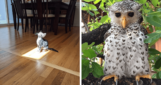 this week's collection of pictures that are worth more than 1000 words | thumbnail includes two pictures including an owl with a heart pattern on its feathers and a kitten standing in the middle of a sun square looking up