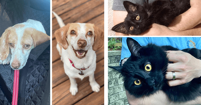 14 images of adoption transformations for pets | thumbnail left dog adoption glow up, thumbnail right cat adoption glow up
