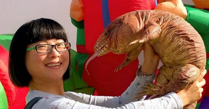 list lizard funny - 1464581