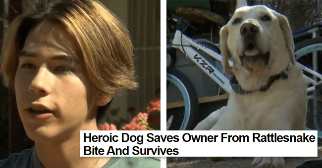 story of dog saving owner from rattlesnake 12 images | thumbnail left owner alex, thumbnail right dog marley
