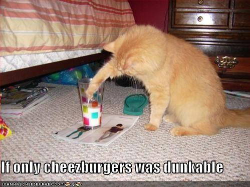Cheezburger Image 1465644800