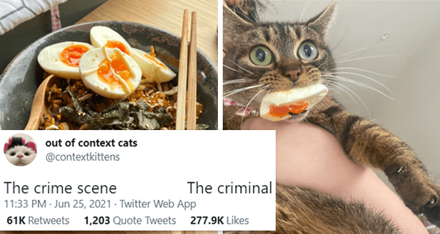 This week's collection of cat tweets | thumbnail includes two pictures including a food dish and a cat with an egg in its mouth 'Food - out of context cats ... @contextkittens The crime scene The criminal 11:33 PM Jun 25, 2021 · Twitter Web App 61K Retweets 1,203 Quote Tweets 277.9K Likes'