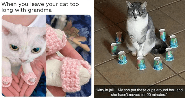 """Caturday cat memes   thumbnail includes two memes including a cat with pink shoes 'Cat - When you leave your cat too long with grandma' and a cat sitting in a circle of cups 'Cat - """"Kitty in jail... My son put these cups around her, and she hasn't moved for 20 minutes.""""'"""