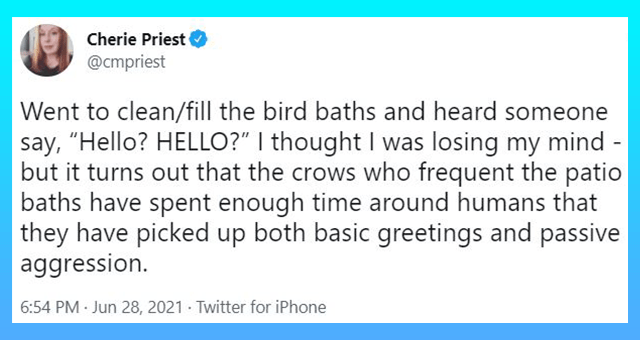 """twitter thread about crows scaring a person by saying 'hello' 