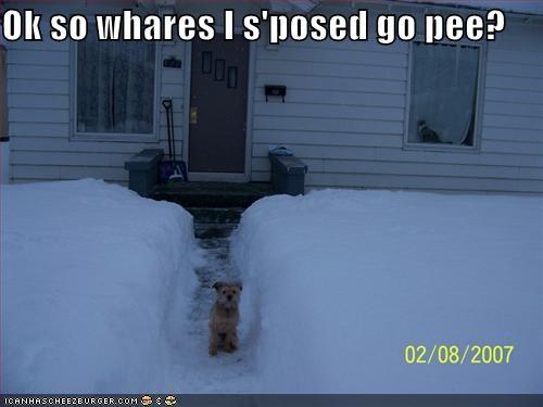 cairn terrier help pee snow where
