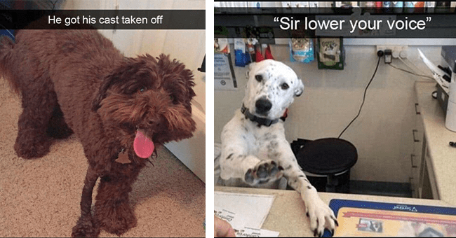 """13 dog snapchats 