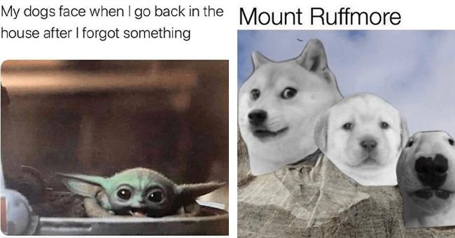 12 dog memes | thumbnail left dog meme when owner comes back home, thumbnail left dog meme mount ruffmore