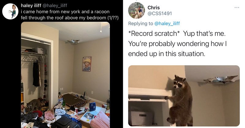 trash panda, raccoons, possum, animals, animal memes, wholesome, funny memes, wildlife, memes, twitter memes, trending tweets, twitter