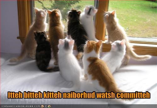 ibkc kitten lolcats lolkittehs neighborhood watch spying - 1467222272