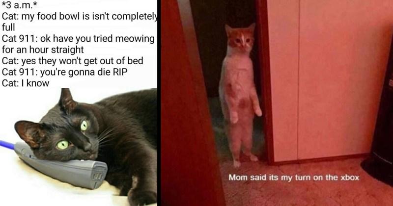 cute memes funny pics dumb memes funny memes classic memes Memes lol animal memes wholesome memes Cats funny cat memes - 14678277