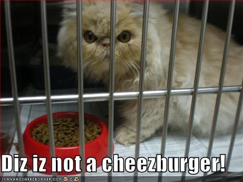 Cheezburger Image 1468030208