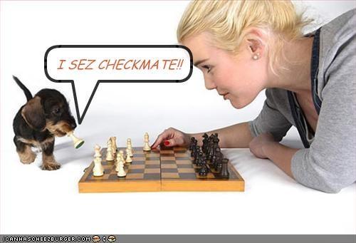 Cheezburger Image 1468165888