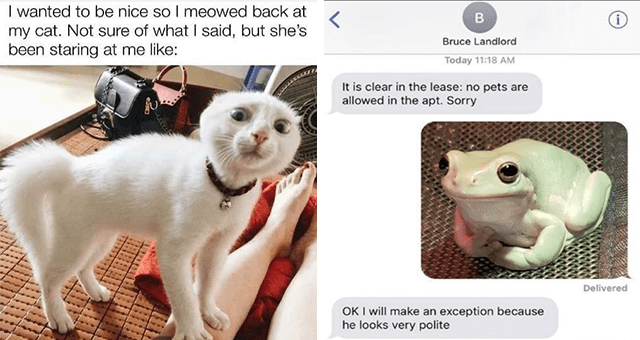 list of funny and fresh animal memes | thumbnail includes two memes including a surprised looking cat 'Cat - I wanted to be nice so I meowed back at my cat. Not sure of what I said, but she's been staring at me like:' and a message set with a pic of a frog 'Organism - Bruce Landlord Today 11:18 AM It is clear in the lease: no pets are allowed in the apt. Sorry Delivered OK I will make an exception because he looks very polite'