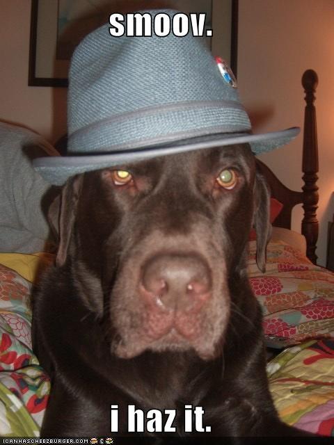 hat labrador - 1468641536