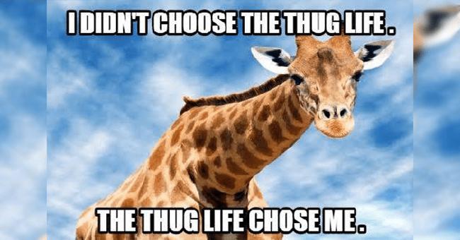 "12 giraffe memes | thumbnail giraffe meme ""the thug life chose me"""