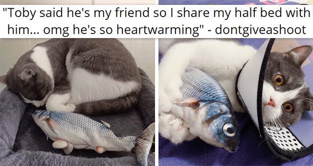 """viral imgur thread about a cat sharing half its bed with a toy fish 