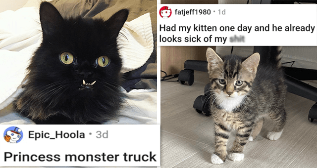 a collection of posts about cats | thumbnail includes two pictures including a groomed cat 'I got my girl groomed. This…is not what I was expecting. I can't stop laughing. u/GoMooGo' and a kitten 'Had my kitten one day and he already looks sick of my sh*t u/fatjeff1980'