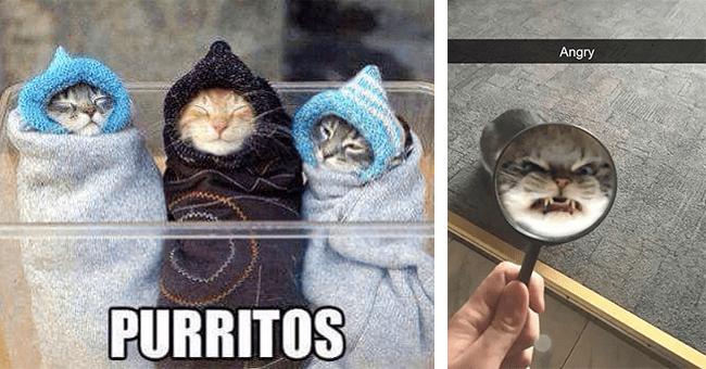 "26 cat memes and gifs | thumbnail left three kittens ""purritos,"" thumbnail right cat snapchat ""angry"""