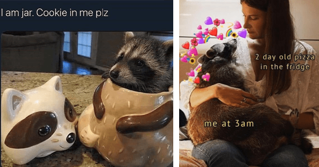 """14 raccoon memes 