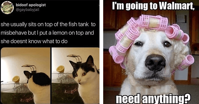 """16 animal memes and tweets 