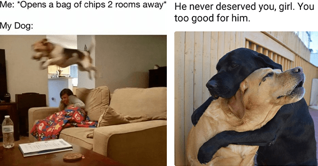 """25 dog memes 