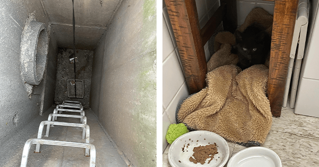 8 images and videos of kitten rescue | thumbnail left kitten in storm drain, thumbnail right kitten rescued in shelter with food
