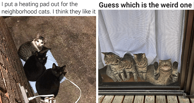 Caturday cat memes   thumbnail includes two memes including three cats sitting on a heating pad outside '' and three cats and one funny cat plastered to a window ''