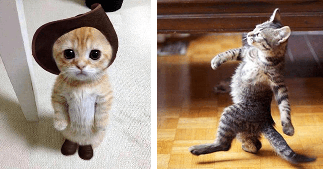 30 images of cats standing   thumbnail left tiny adorable cat with hat and boots, thumbnail right cat in stride on the go walking