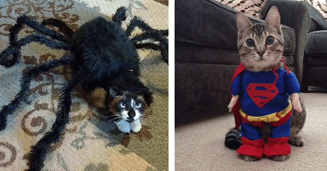 18 images of cats in costumes | thumbnail left cat in spider costume, thumbnail right cat in superman costume
