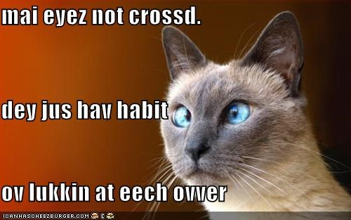 crossed eyes lolcats silly - 1471648512