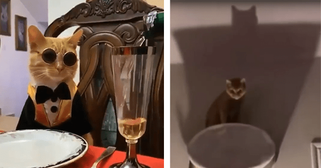 24 cat gifs | thumbnail left fancy cat being poured a glass, thumbnail right scary cat with big shadow
