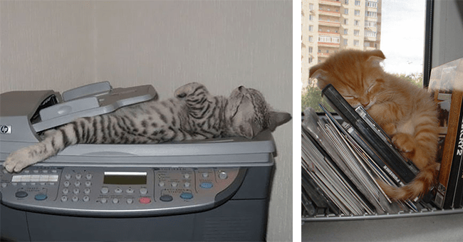 29 images of cats sleeping in various positions and places | thumbnail left cat sleeping, thumbnail right cat sleeping on shelf