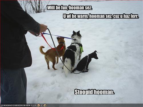 border collie cold frozen fur harbls human labrador snow stupid - 1472734976