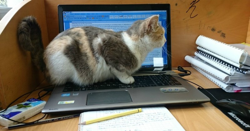list work cute Cats animals - 1472773