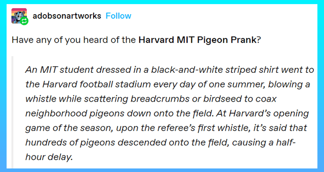 animal tumblr posts | thumbnail includes one tumblr post 'adobsonartworks Have any of you heard of the Harvard MIT Pigeon Prank? An MIT student dressed in a black-and- white striped shirt went to the Harvard football stadium every day of one summer, blowing a whistle while scattering breadcrumbs or birdseed to coax neighborhood pigeons down onto the field. At Harvard's opening game of the season, upon the referee's first whistle, it's said that hundreds of pigeons descended onto the field, caus'
