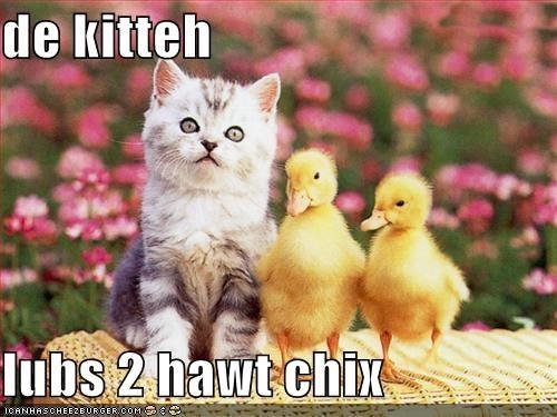 De Kitteh Lubs 2 Hawt Chix
