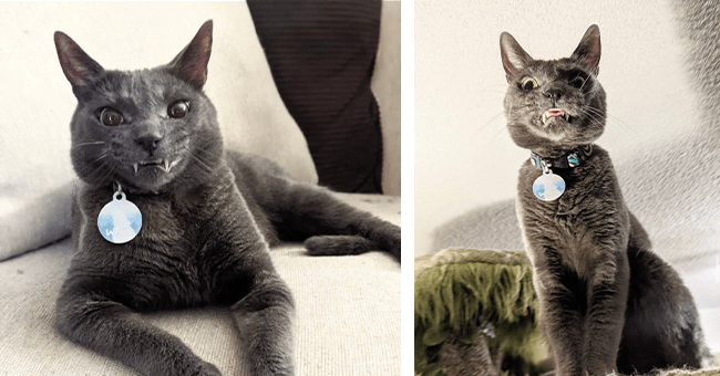 13 images of wolfie the cat | thumbnail left wolfie laying down smiling, thumbnail right woflie sitting up straight