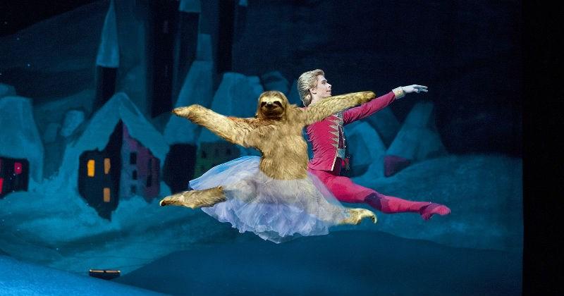 funny sloth photoshops