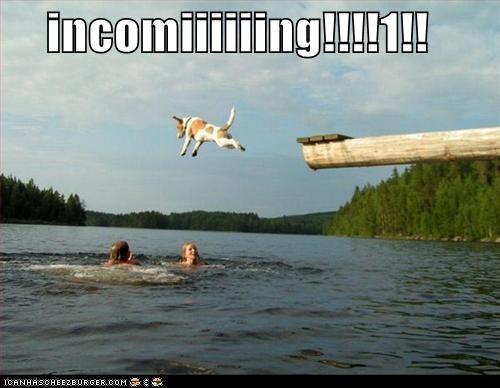 diving jack russel terrier jumping lake outside water - 1473582848