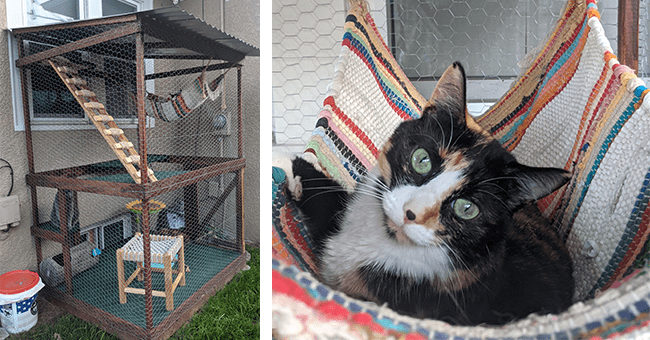 14 images of cat structure and cats | thumbnail left of structure from distance, thumbnail right cat lying in hammock in structure