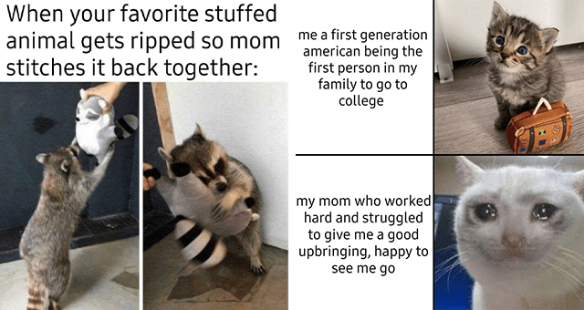 collection of wholesome animal memes | thumbnail includes two memes including a raccoon hugging a toy raccoon 'Cat - When your favorite stuffed animal gets ripped so mom stitches it back together:' and a cat with a suitcase and a crying cat 'Cat - me a first generation american being the first person in my family to go to college my mom who worked hard and struggled to give me a good upbringing, happy to see me go'