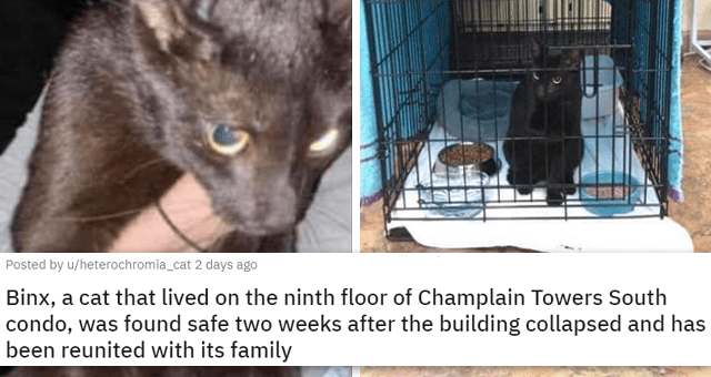 a collection of posts about cats | thumbnail includes two pictures of a rescued black cat 'Binx, a cat that lived on the ninth floor of Champlain Towers South condo, was found safe two weeks after the building collapsed and has been reunited with its family u/heterochromia_cat'
