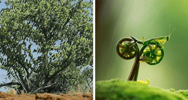 this week's collection of pictures that are worth more than 1000 words | thumbnail includes two pictures including a tree made of parrots and a grasshopper riding a leaf bicycle