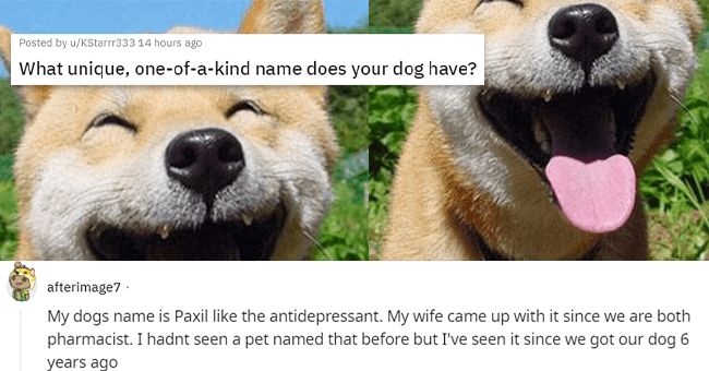 13 text images of dog name expla