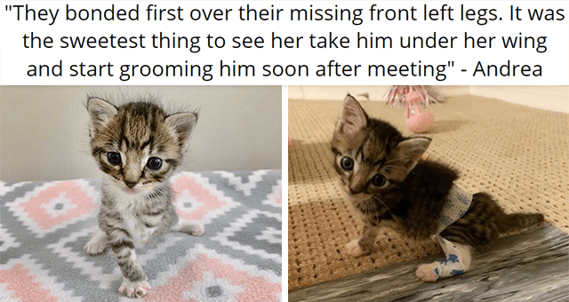 """story about an adopted tripod kitten getting adopted 